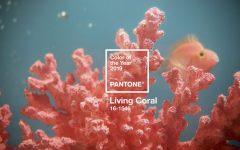 Pantone® Living Coral. Dalla natura il nuovo trend dell'anno